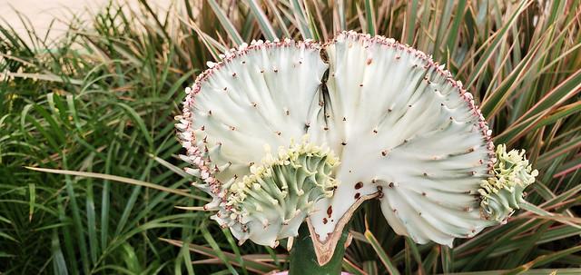 A Strange Flower in Sister Cecilia's Garden
