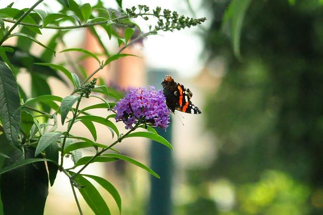 Herbst 2020 ... Apfelkuchen, Blumen und Schmetterling ... Brigitte Stolle