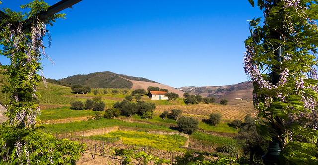 Paisaje en el norte de Portugal (zona Vale do Douro)