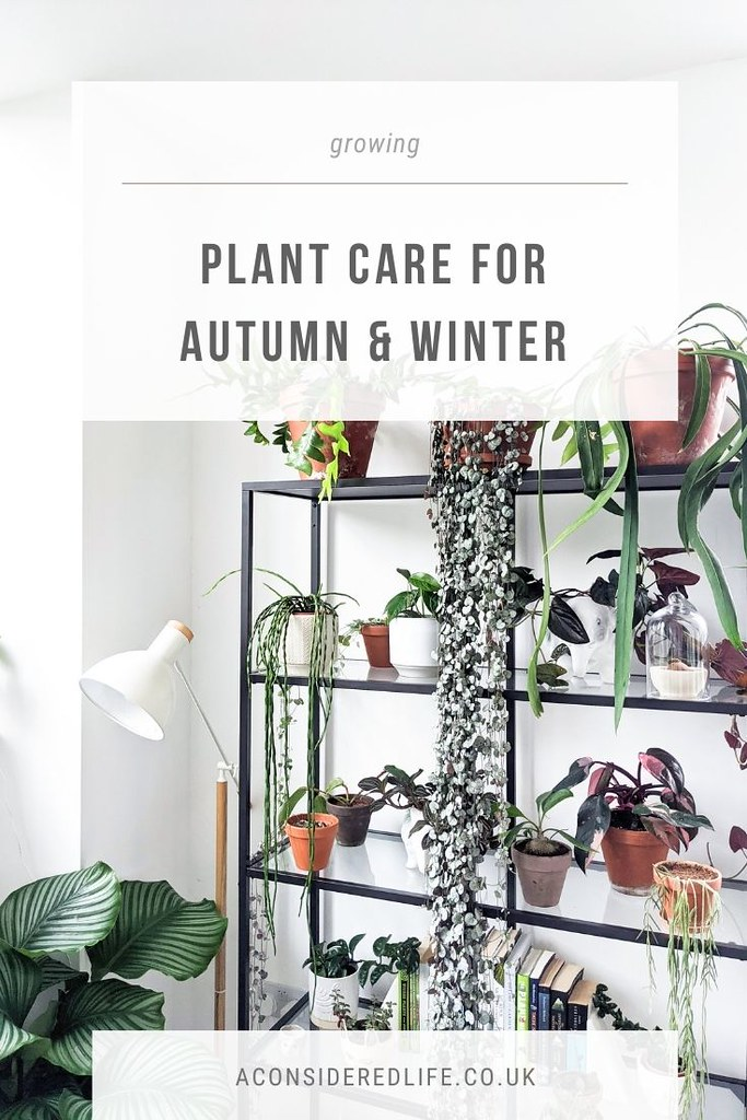 House Plant Care For Autumn and Winter
