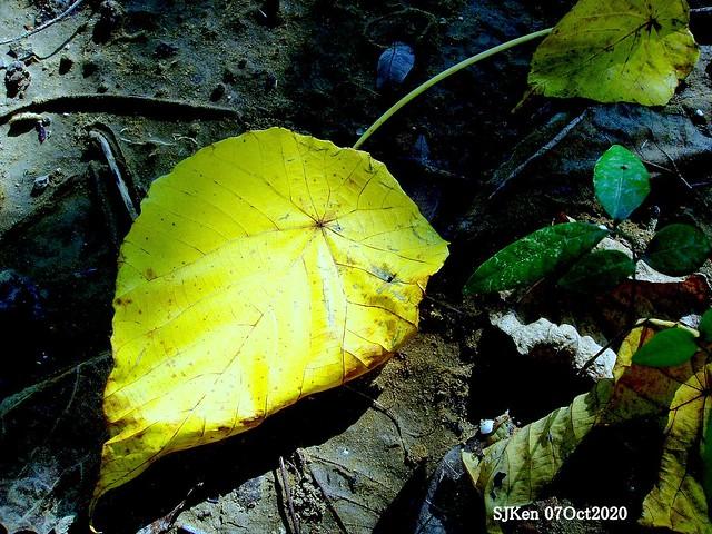 Flower, bird & fallen leaves, overlayering artwork, Taipei, Taiwan, SJKen, Oct 7, 2020.