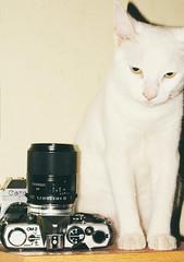 Shoot film, not animals