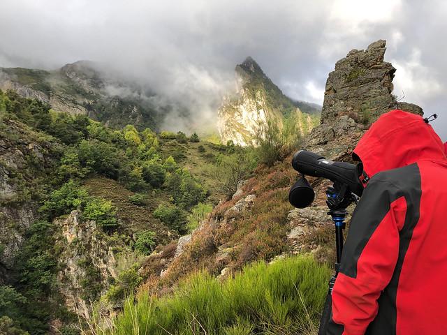 Buscando animales en la Cordillera Cantábrica