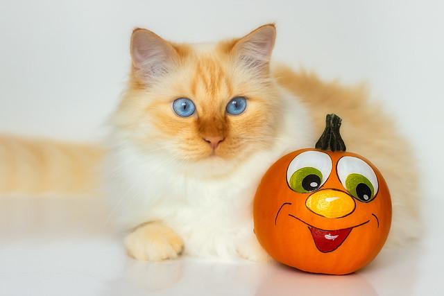 Gosh, you are one strange pumpkin !