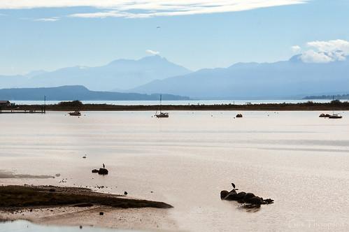 birds oiseaux water pink blue beauty bay mountains