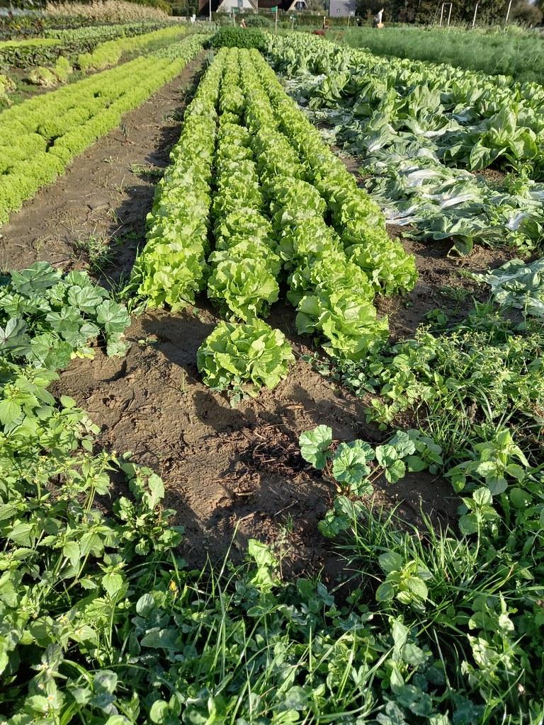 L4 bioboerderij 2020-10-07 (14)