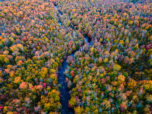 above alone autumn beautiful dji drone fall forest landscape leaf leaves mavic nature outdoor outdoors scenery scenic trees