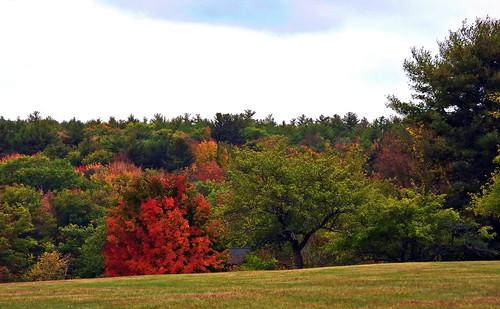 foliage landscape trees nikon coolpix nature
