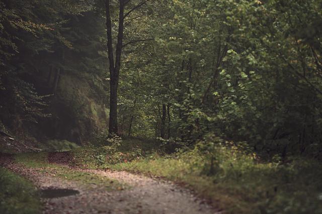Caminos de Irati VII
