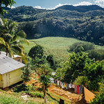 House Over Sugarcane Fields, Balaclava Jamaica