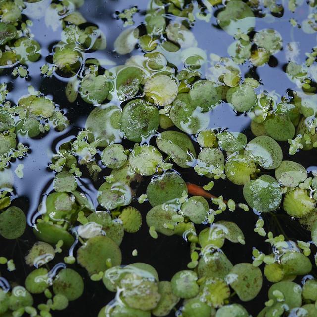 2160x2160 Mini Pond  Winter Proofing