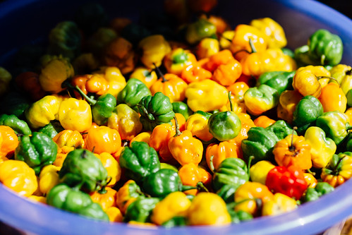 adamcohn jamaica mandevillejamaica chilis habanero peppers scotchbonnet streetphotographer streetphotography
