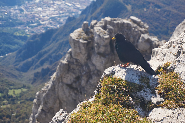 The chough and the abyss