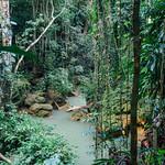 Jungle Around Deadnut Valley Falls, Bartons Jamaica