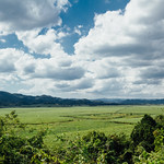 Sugarcane Fields, Balaclava Jamaica
