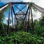 Jungle Bridge, Maggoty Jamaica