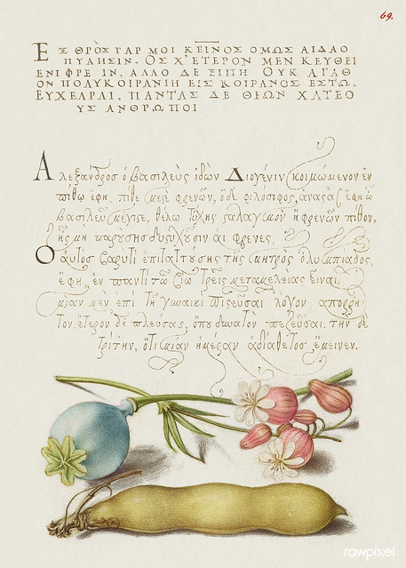 Opium Poppy, Bladder Campion, and Broad Bean from Mira Calligraphiae Monumenta or The Model Book of Calligraphy (1561–1596) by Georg Bocskay and Joris Hoefnagel. Original from The Getty. Digitally enhanced by rawpixel.