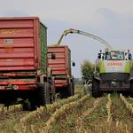 Maize Harvest II