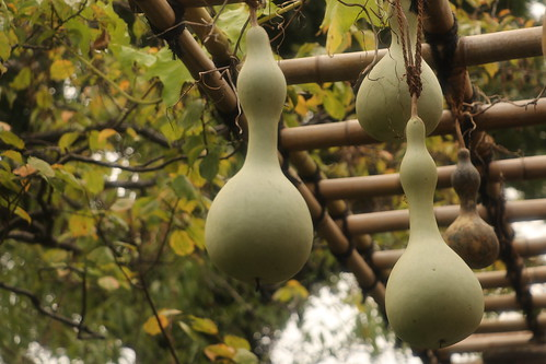 Gourds in Mukojima Hyakkaen Garden | by walking.biking.japan