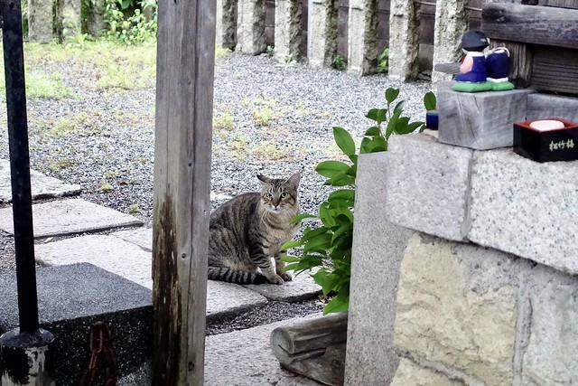 Today's Cat@2020ー10ー08