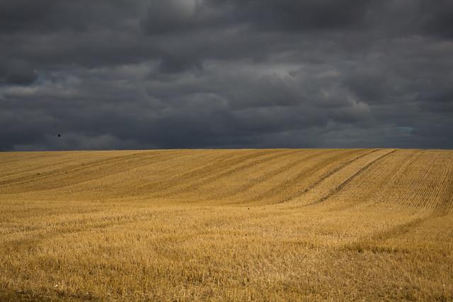 Stormy Cornfields