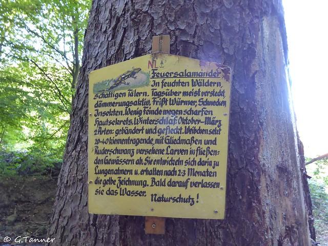 Harz Ilsetal