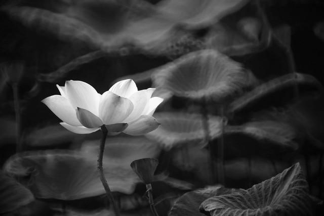 花中仙 / Flower Fairy