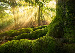 Green Roots | by albert dros