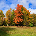 Fall_Color_Pano-