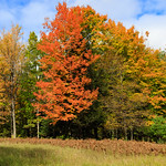 Fall_Colors-
