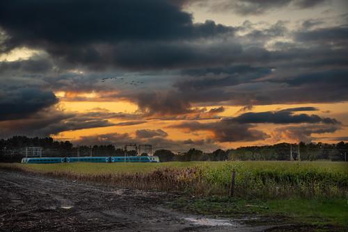 sunset chelford cheshire geese train england evening
