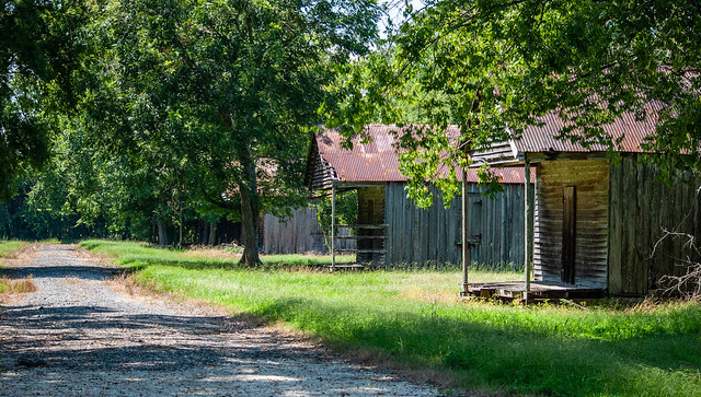 Laurel Valley Cabin Road