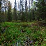 Wet_Spot-