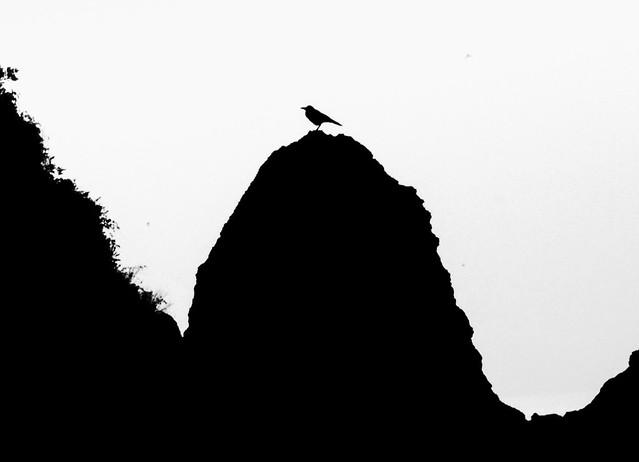 Blackbird Signing in the Dead of Night