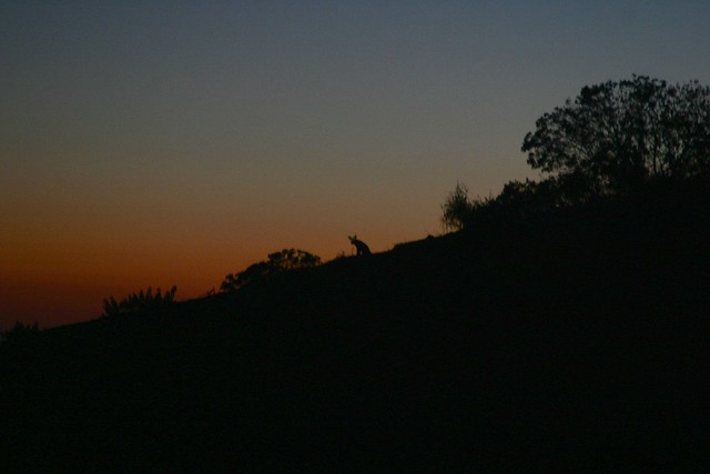 tbt: Coyote sunset