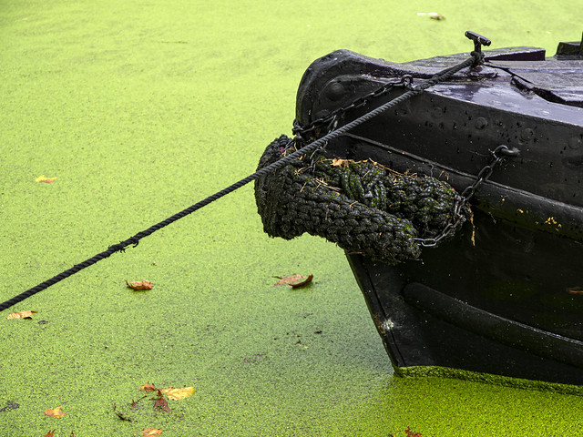 Little Venice, tied up in duckweed