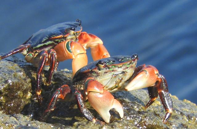 Crabs at the Sausalito Waterfront