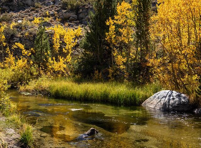 Quiet Fall Moment