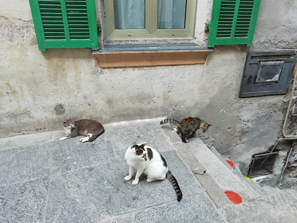 chats italiens
