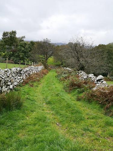 Path to Llyn Cynwch (looking back)