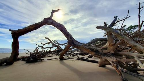 driftwood driftwoodbeach bigtalbotislandstatepark bigtalbotisland beacheslandscapes landscape beach thisisflorida floridastateparks floridabeaches samsunggalaxynote cloudysky clouddrama cloudy landscapephotography
