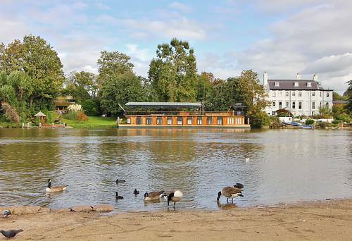 pinkfloyd davidgilmour recordingstudio astoria houseboat fredkarno geese riverthames hurstpark eastmolesey
