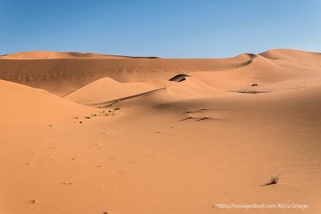 Foto de las dunas del desierto de Argelia