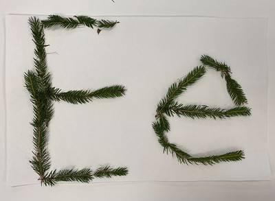 evergreens Ee
