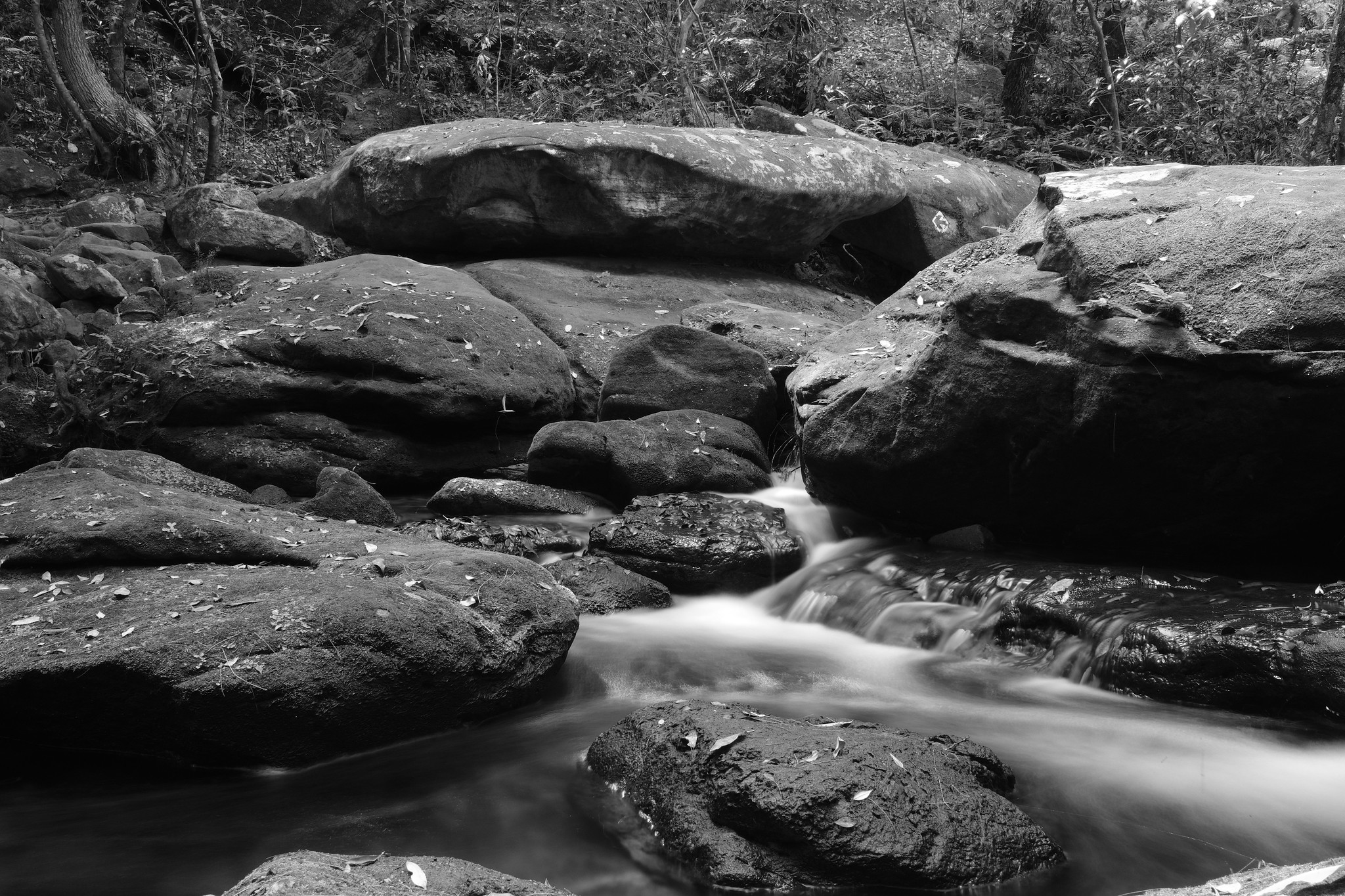 Lyrebird Gully Creek