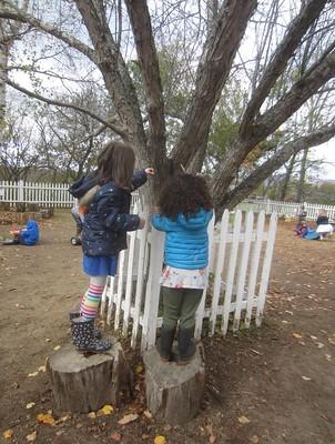 the tree doctors
