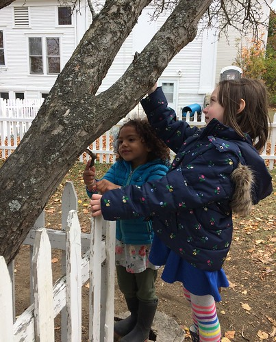 caring for the sick tree | by lyn.schmucker