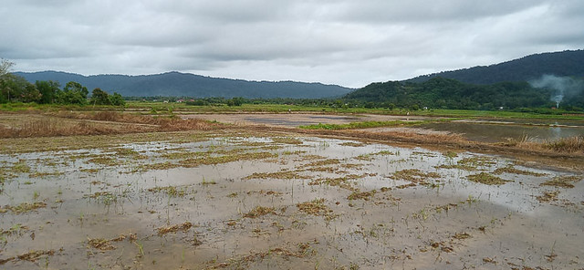 Sawah near Bukit Hantu