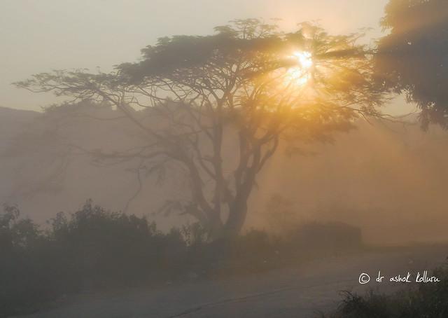 Misty road, Araku, Vizag