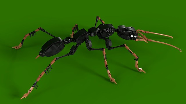 The Jack Jumper Ant.